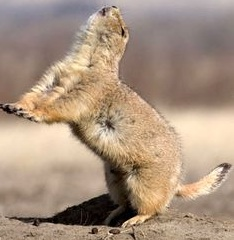 We can do this! Let's secure the future for our joyous prairie dog families!