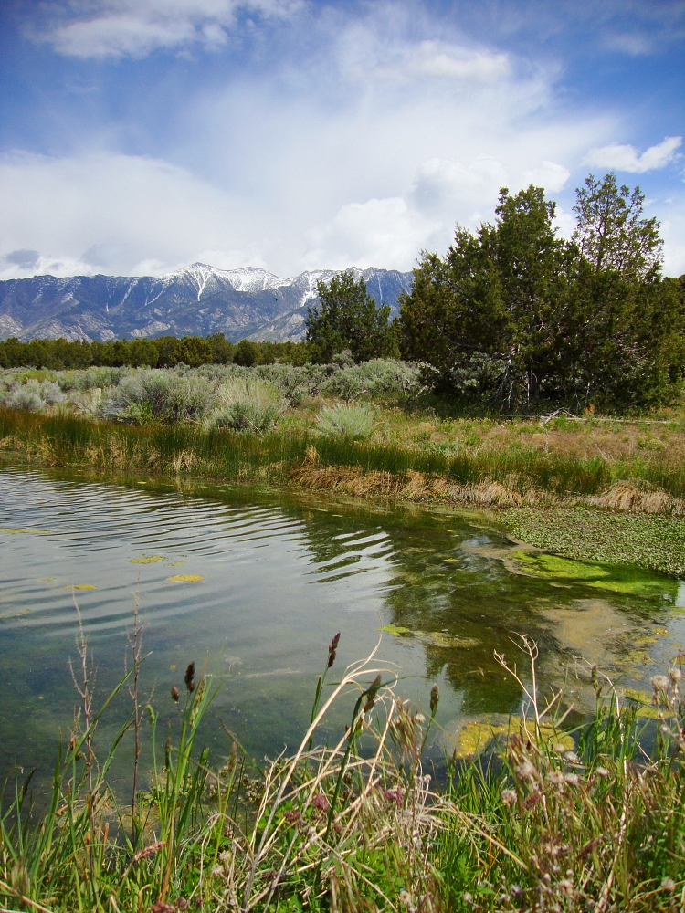Great Basin Spring, Goshute Reservation